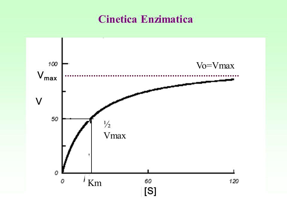 Cinetica Enzimatica Vo=Vmax Vmax V ½ Vmax Km [S]